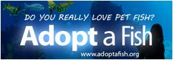 Adoptafish.org Discus Fish Banner